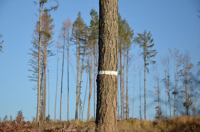 označený strom